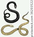 Viper snake. serpent cobra and python, anaconda or 36203522