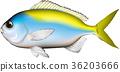 물고기, 벡터, png 36203666