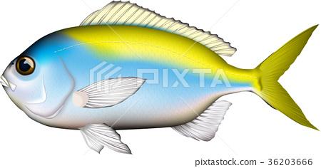 물고기, 생선, 벡터 36203666