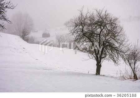 naked tree on snowy rural hillside in fog 36205188