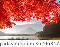 후지산 단풍 단풍 나무 精進湖 36206847