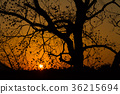 tree, wood, silhouette 36215694