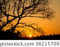 tree, wood, silhouette 36215700