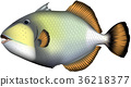 fish, fishes, saltwater fish 36218377