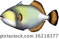 벡터, 물고기, 스쿠버 다이빙 36218377