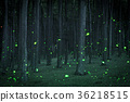 Night coniferous forest with magical fireflies 36218515