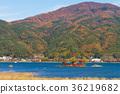 가와구치 호수, 단풍, 풍경 36219682