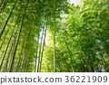 죽림, 대나무 숲, 녹 36221909