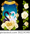 Swans and white Roses 36224346