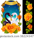 Swans and yellow Roses 36224347