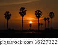 Palm trees silhouette 36227322