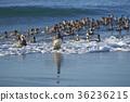 海灘 鳥兒 鳥 36236215