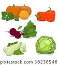 Gardening Vegetables Isolated on White 36236546