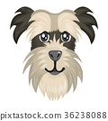 schnauzer, dog, face 36238088