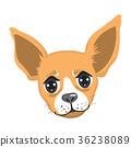 Chihuahua Portrait Avatar 36238089