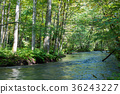 Oirase山間溪流夏天[青森縣] 36243227