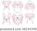 dog, dogs, animal 36244346
