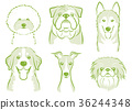 dog, dogs, animal 36244348