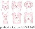 dog, dogs, animal 36244349