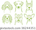dog, dogs, animal 36244351