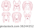 dog, dogs, animal 36244352