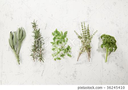 鼠尾草,迷迭香,沙比,百里香,歐芹(右起) 36245410