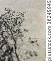 秋日,午後樹影 36245945