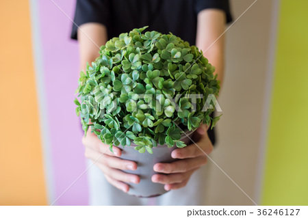 Hand holding flowerpot with artificial tree. 36246127