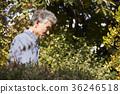 家庭,老夫妻,丈夫,妻子,步行,花園 36246518