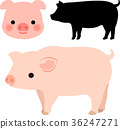pig, pigs, set 36247271