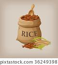 水稻 稻米 米飯 36249398