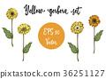 daisy, vector, flower 36251127