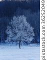겨울 풍경 36252049