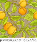 apricot, fruit, branch 36252745
