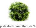 Christmas green tinsel pile. 36255676