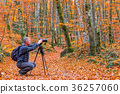 Photographer take pictures of beech forest  36257060