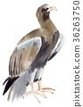 Watercolor illustration of a bird eagle 36263750