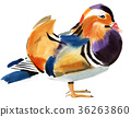 Watercolor illustration of Mandarin duck 36263860