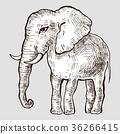 大象 向量 向量圖 36266415