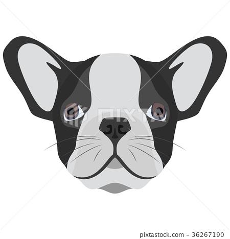 Illustration Dog English bulldog 36267190