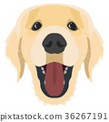 Illustration Dog Golden Retriever 36267191