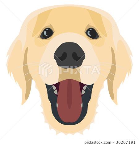 Illustration Dog Golden Retriever 36267191