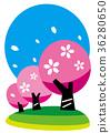 春天櫻花 36280650