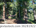 forest, hammock, colorado 36281922