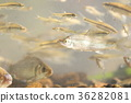 Fish fish tank ecosystem ecosystem native species alien species 36282081