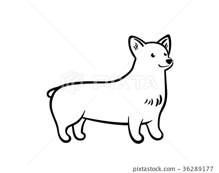 Vector outline staying corgi. 36289177