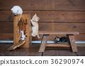 一起玩耍的小猫们 36290974
