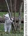 猫 猫咪 小猫 36290977