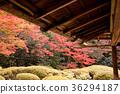 秋叶在京都庭院2里 36294187