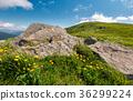 landscape, flower, hill 36299224